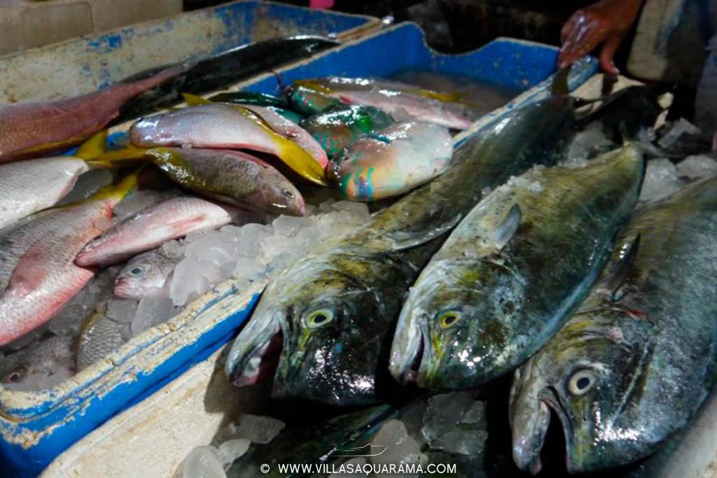 jimbaran-fishmarket-in-bali-bukit-villasaquarama-for-rent