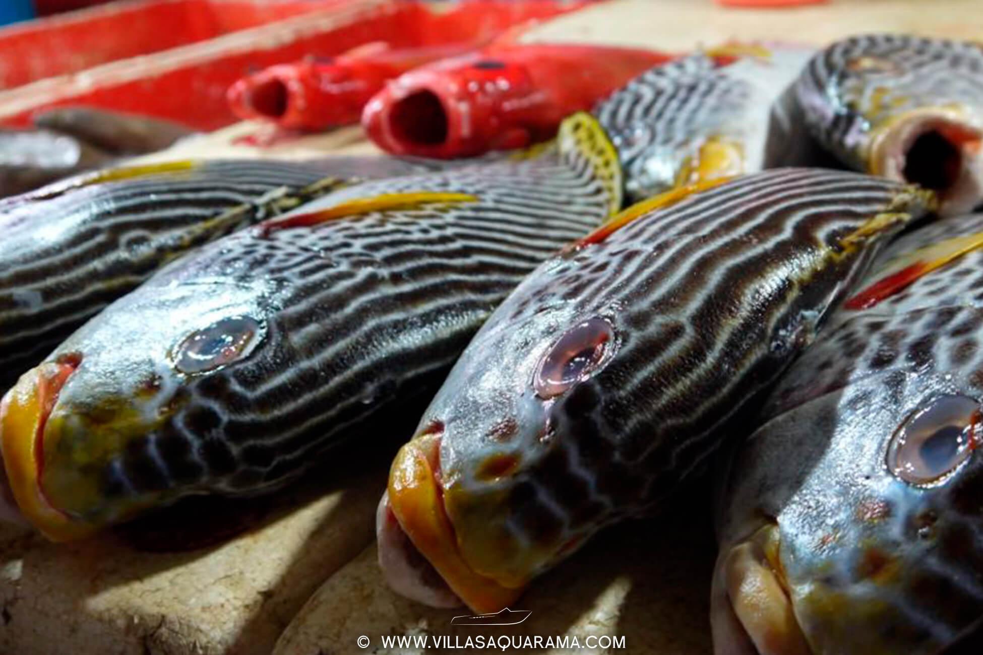 jimbaran-fishmarket-in-bali-bukit-villasaquarama