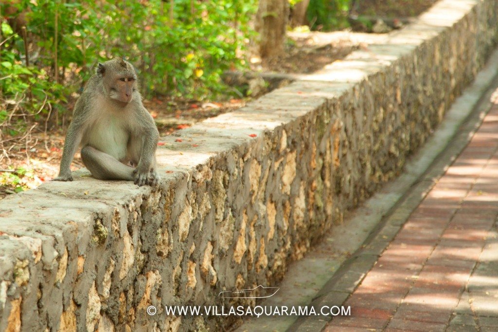 Monkey in Uluwatu temple