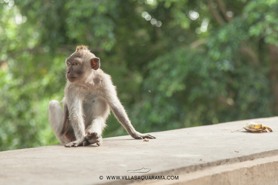 temple-wild-monkey-forest-bali-villas-aquarama-rent-08