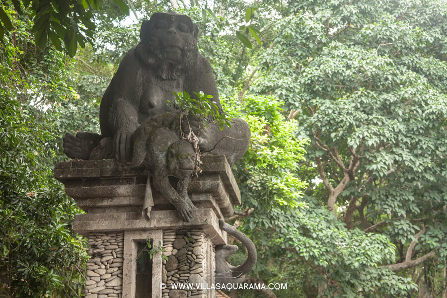 temple-wild-monkey-forest-bali-villas-aquarama-rent-monkeys-06